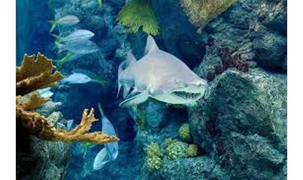 Big image fl aquarium 1