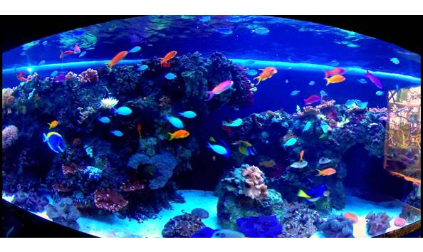 Big image fl aquarium 2