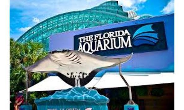 Big image fl aquarium
