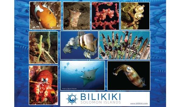 Big image bilikiki banner 2018