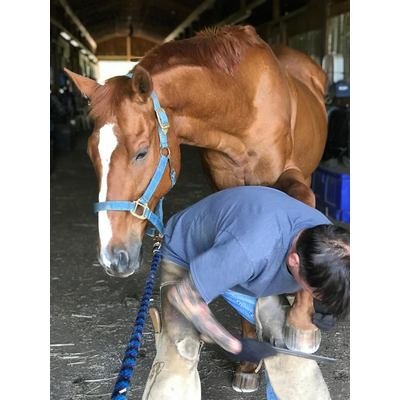 Farrier Service - Shoeing or Trims