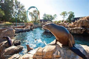 Seaworld seal