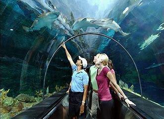 Seaworld tunnel
