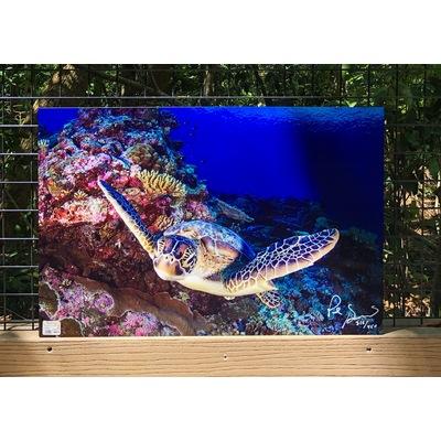 Image flying turtle