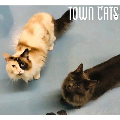 Town Cats Swag, Royal Canin and a Cat!