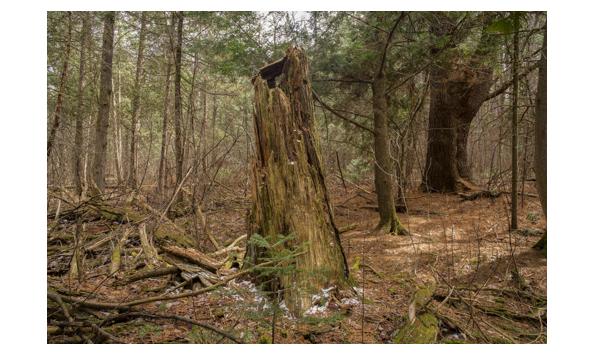 Big image untitled  ottawa  2020 photo david barbour 5