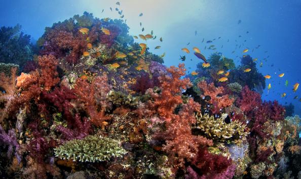 Big image dive soft corals 800x480
