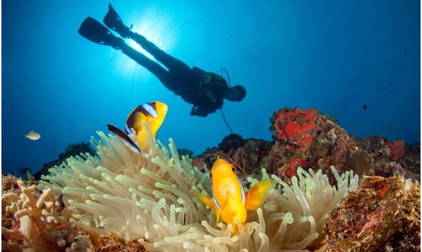 Big image dive rainbow reef 3 800x480